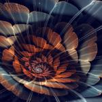 cochilie fractal nautilus