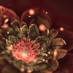 floare de fractal