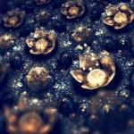 fractal nebulos