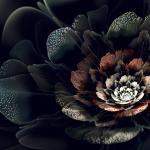 fractal  nuf[r