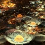 nuferi fractals