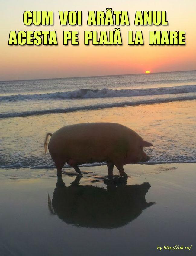porcu_pe_plaja