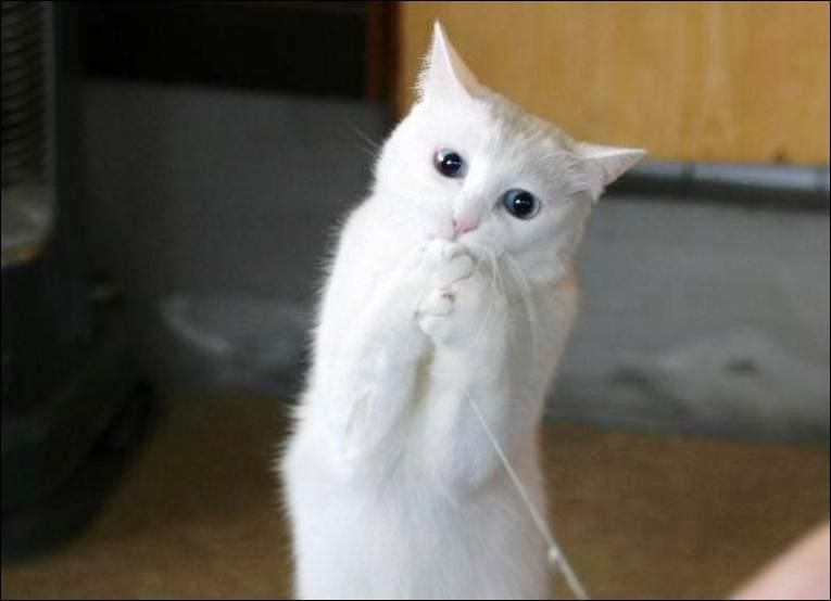 pisica_cu_ata